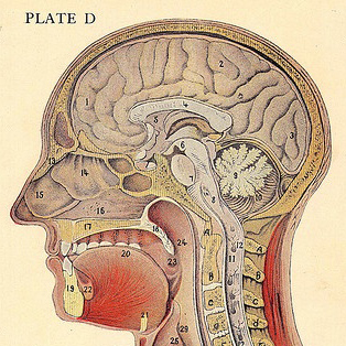 brain images at pinterest